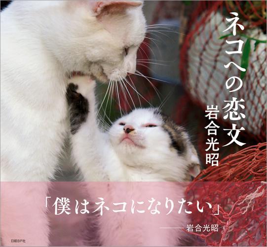 ネコへの恋文 / 岩合光昭