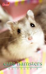 cute hamsters01 ジャンガリアンハムスター