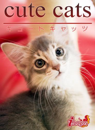 cute cats08 ソマリ / アキバ書房