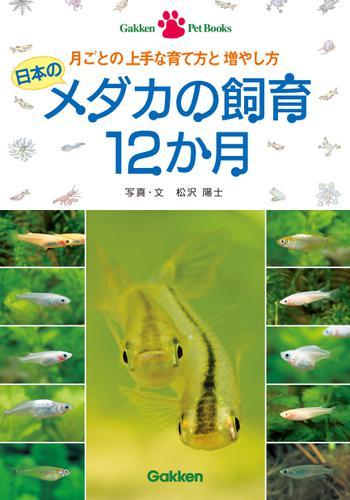 日本のメダカの飼育12か月 / 松沢陽士
