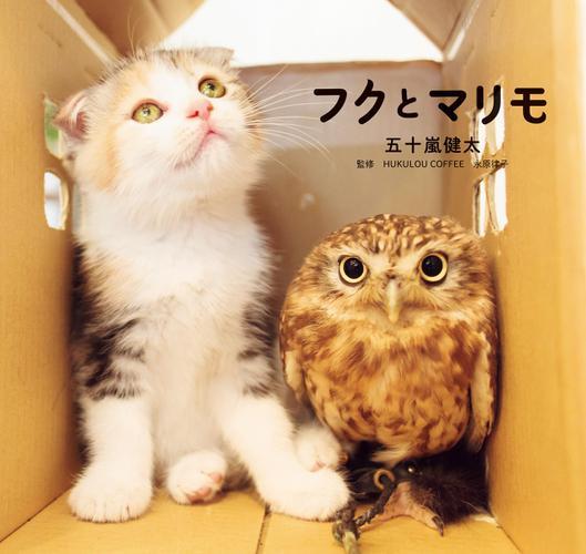 フクとマリモ / 五十嵐健太
