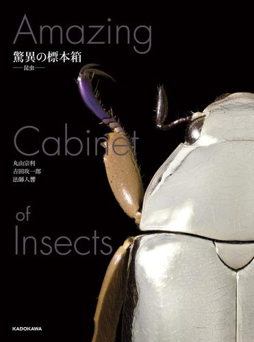 驚異の標本箱 ‐昆虫‐ / 丸山宗利