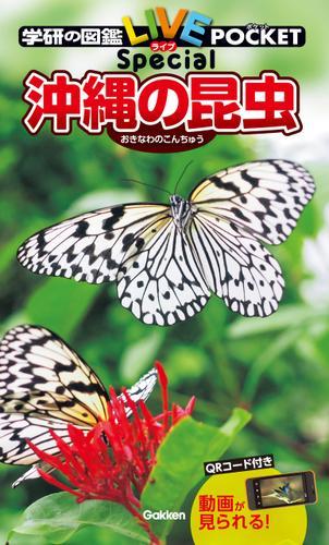 沖縄の昆虫 / 槐 真史