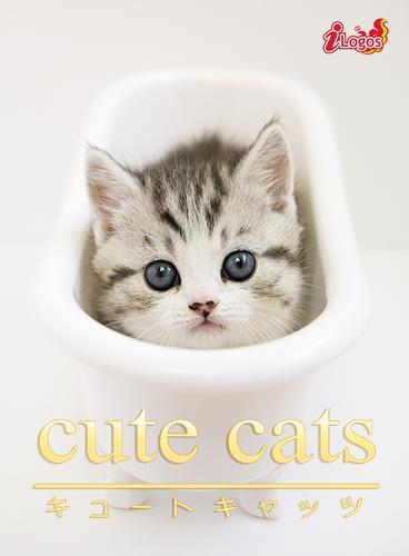 cute cats07 マンチカン / アキバ書房