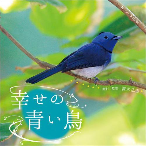 幸せの青い鳥 / 真木広造