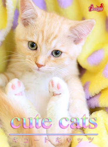 cute cats04 マンチカン / アキバ書房