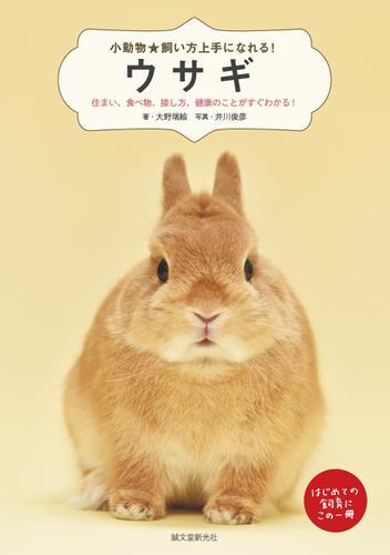 ウサギ / 大野瑞絵