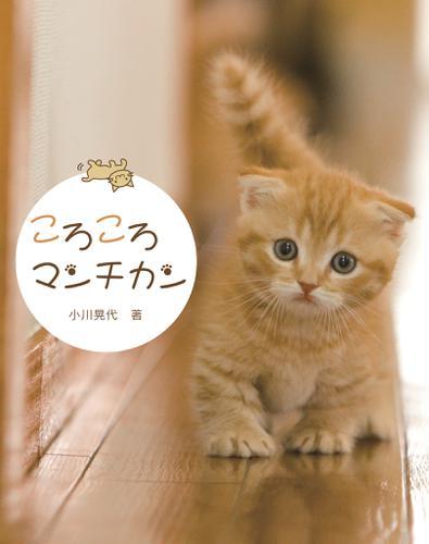 ころころマンチカン / 小川晃代