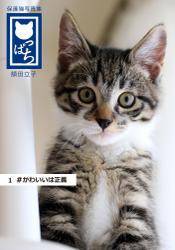 保護猫写真集 ねこっぱち! (1) #かわいいは正義 / 額田立子