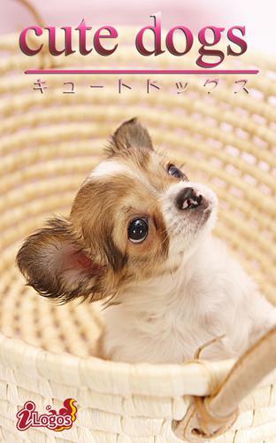 cute dogs18 チワワ / アキバ書房