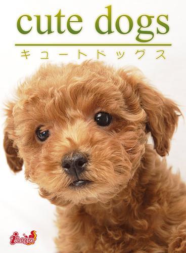 cute dogs10 トイプードル / アキバ書房