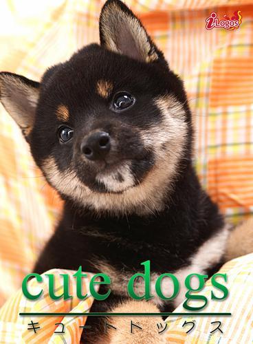cute dogs07 柴犬 / アキバ書房