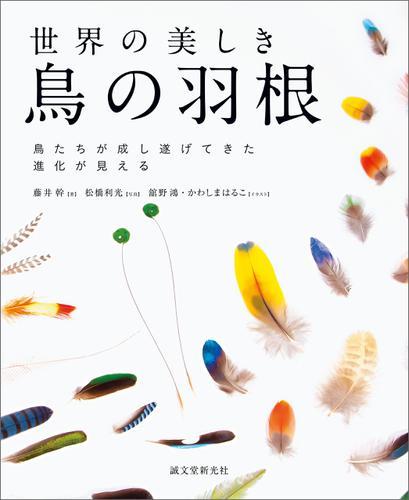 世界の美しき鳥の羽根 / 松橋利光