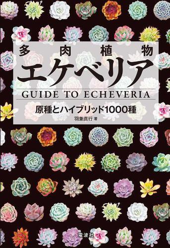 多肉植物エケベリア / 羽兼直行