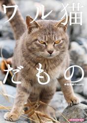 ワル猫だもの