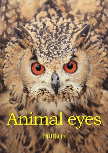 Animal eyes / 前川貴行