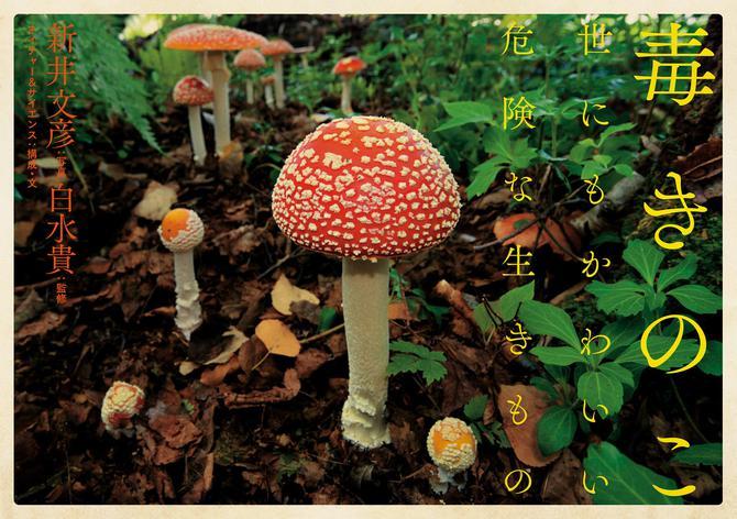 毒きのこ 世にもかわいい危険な生きもの / 新井文彦
