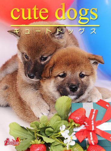 cute dogs05 柴犬 / アキバ書房