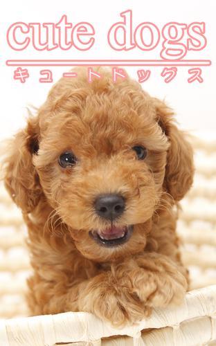 cute dogs01 トイプードル / アイロゴス