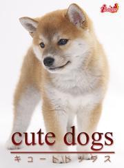 cute dogs09 柴犬