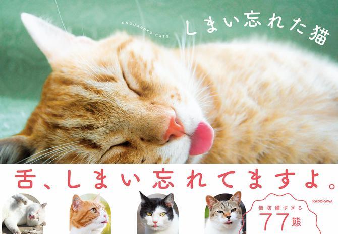 しまい忘れた猫 / KADOKAWA